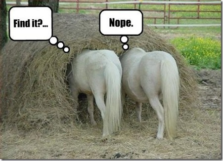 Pictures-of-Funny-Animals-funny-horse-pics-Finding-the-lost-in-the ...
